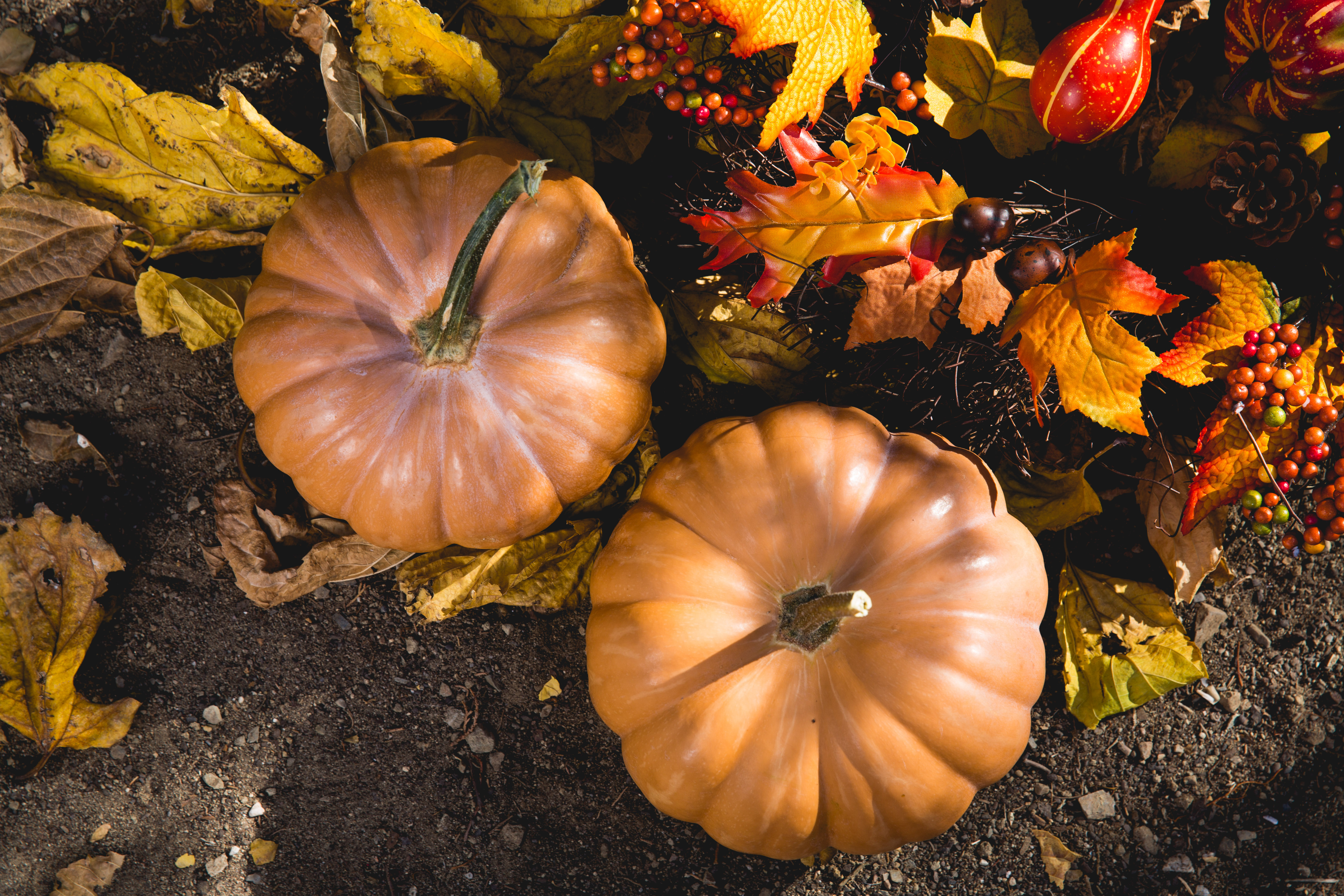 photo of small pumpkins leaves autumn